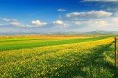 krásný jarní krajina