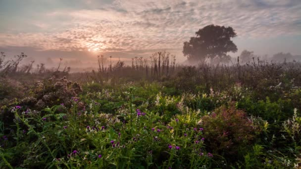 Countryside river scene at sunrise with mist forming over the meadow.