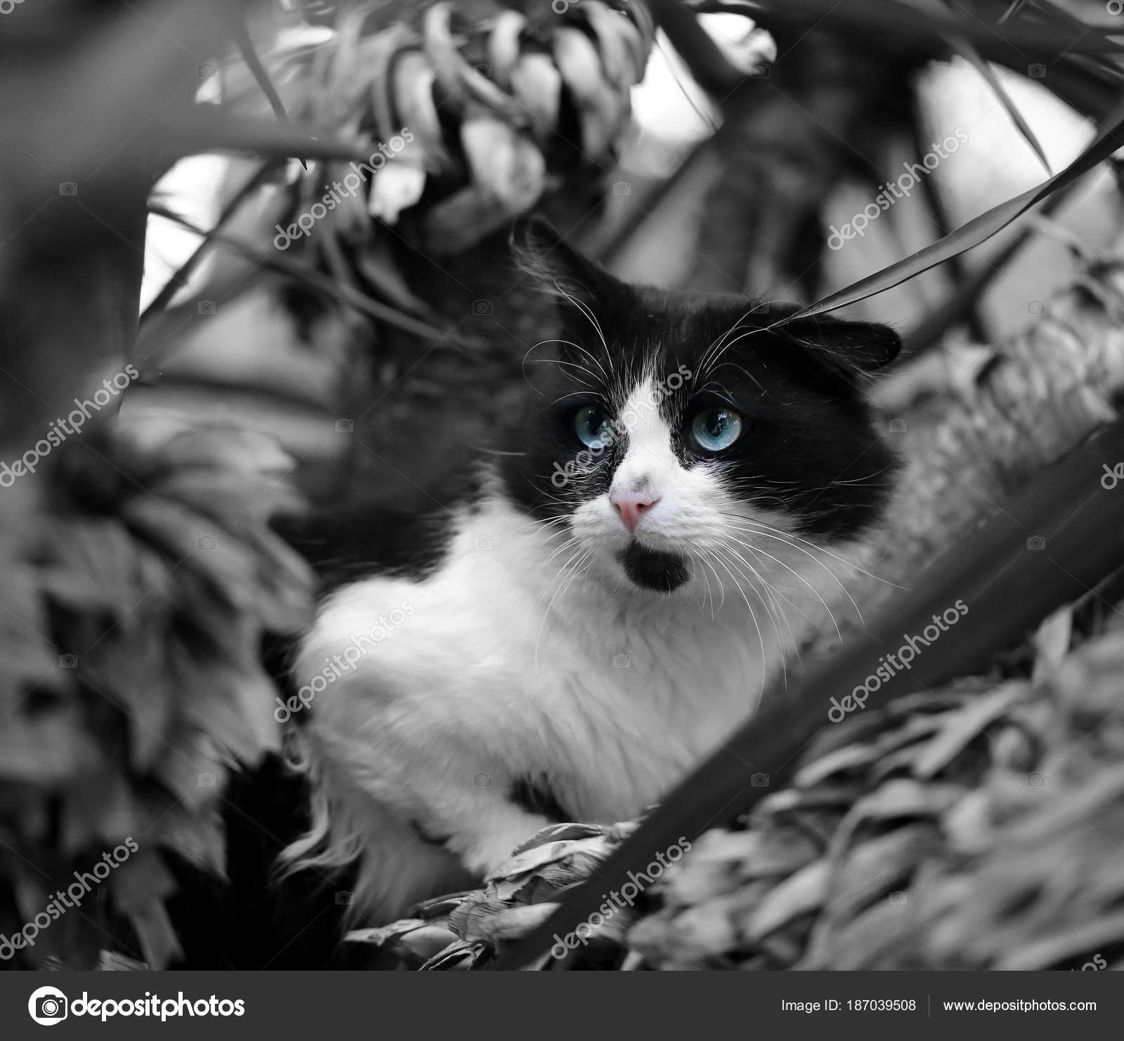 Black And White Cat Wallpaper Beautiful Black And White Cat