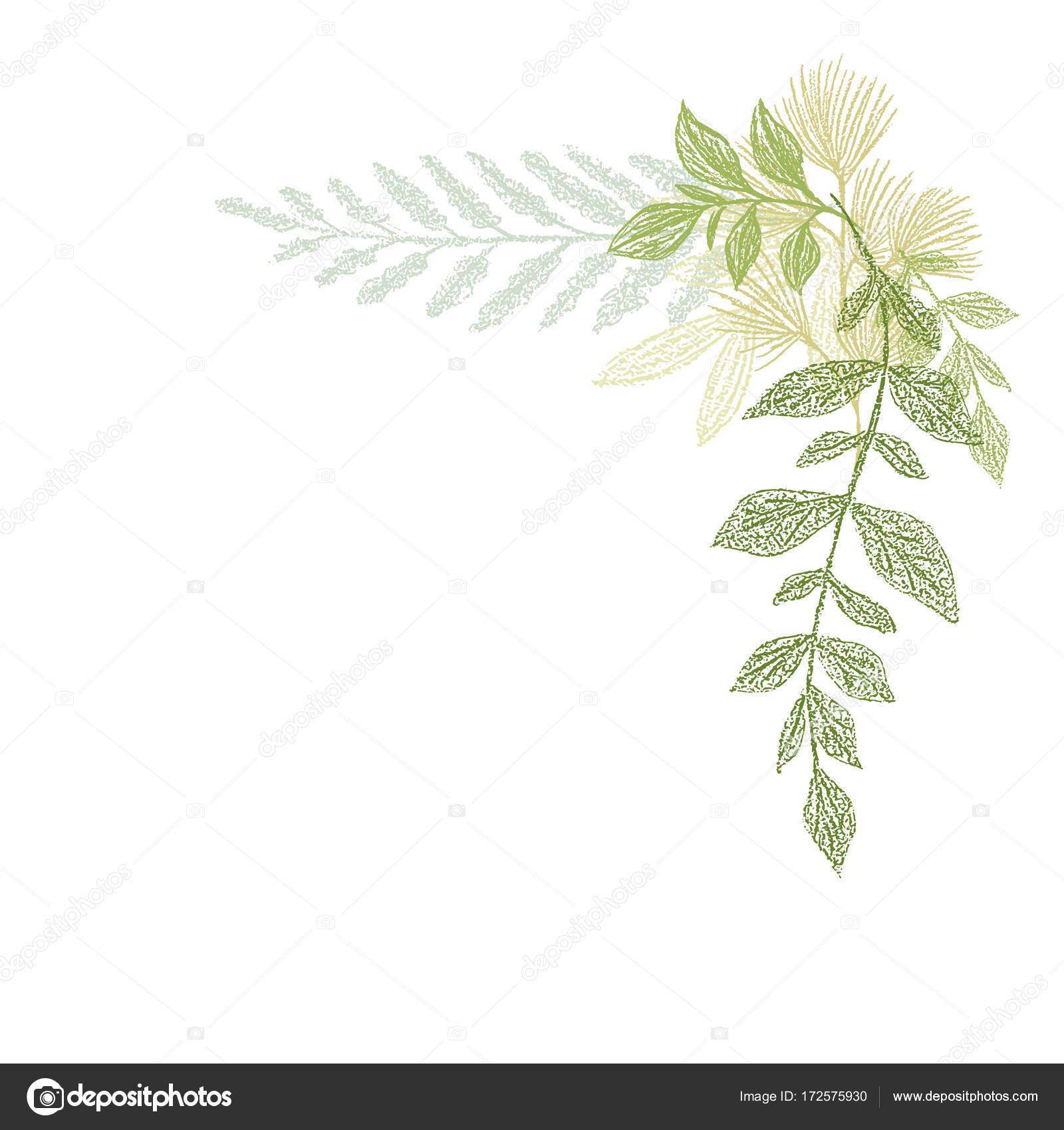 Composicion De Flores Mano Dibujo Verde Hoja Fotos De Stock