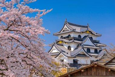 Hikone Castle in Spring