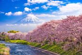 Photo Fuji Mountain in Spring