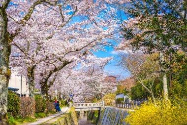 Kyoto, Japan in spring.