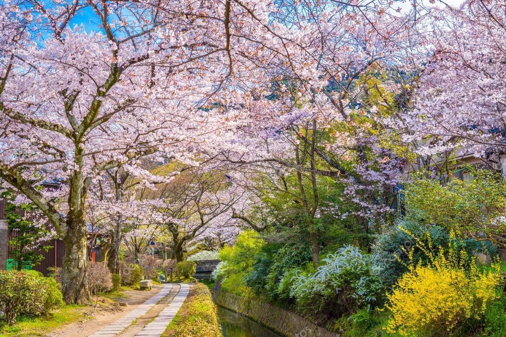 Kyoto, Japan in Spring