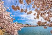 Washington Dc na jaře