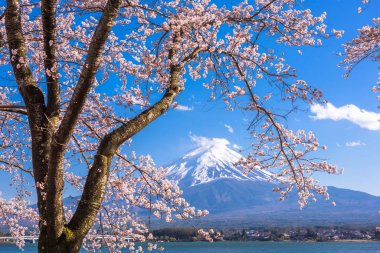Mt. Fuji, Japan on Lake Kawaguchi during spring season. stock vector