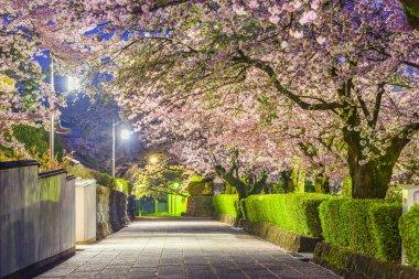 Shizuoka, Japan old town streets around Taiseki-ji Temple in spring season. stock vector