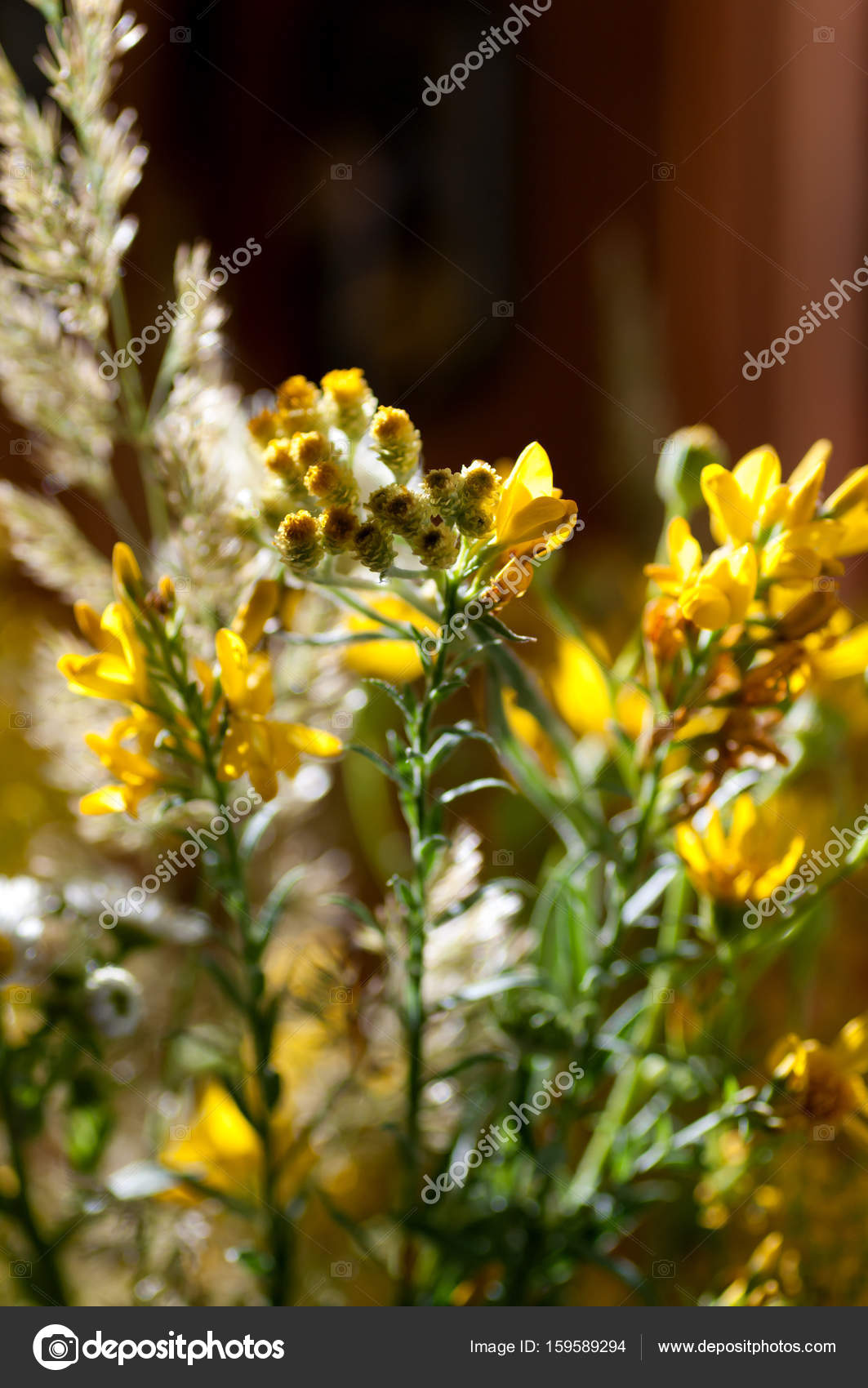 Bouquet Of Wild Yellow Flowers In The Backlight Closeup Stock