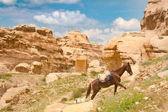 Fotografie Horse in Petra - Jordan