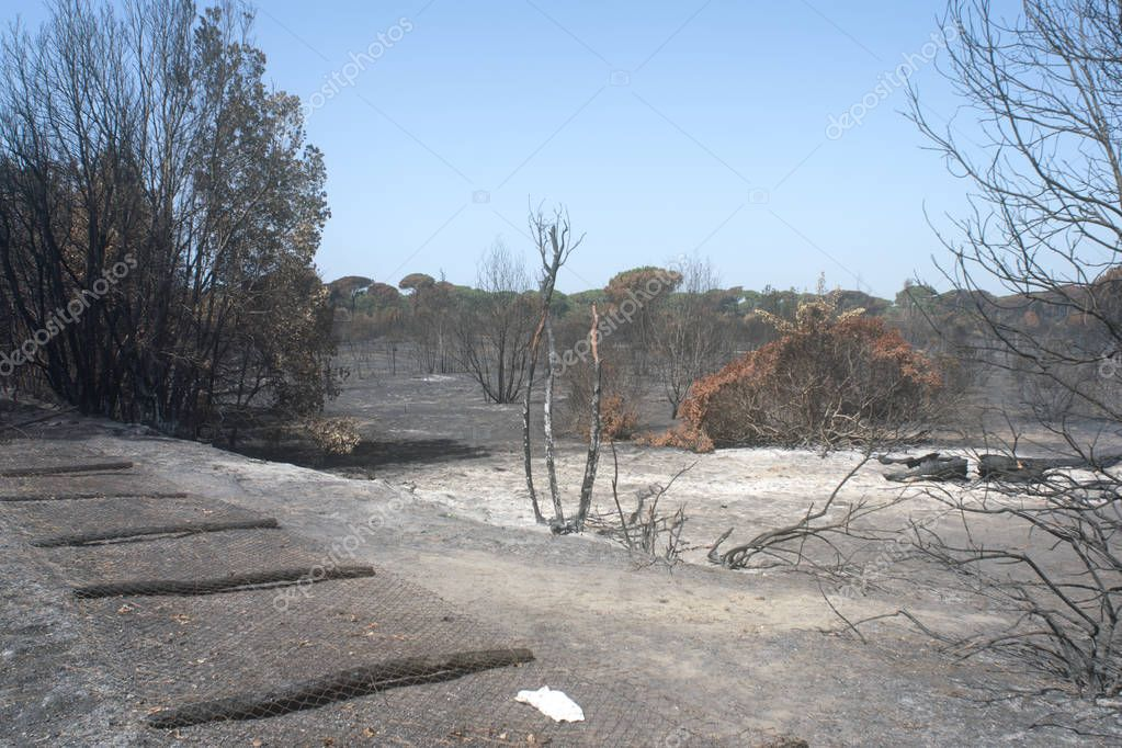 disastrous effects of an arson and of Its dousing in a forest