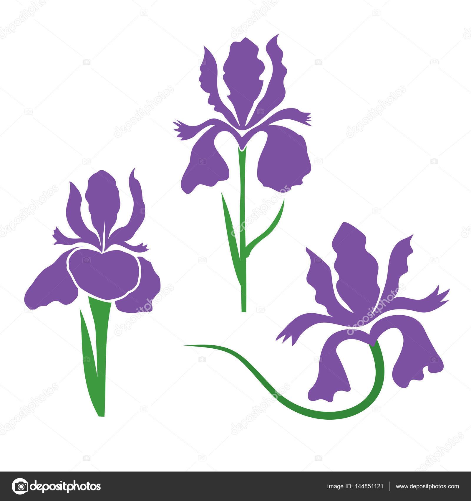 Iris flower stylized stock vector kuzenkova 144851121 iris flower stylized stock vector izmirmasajfo