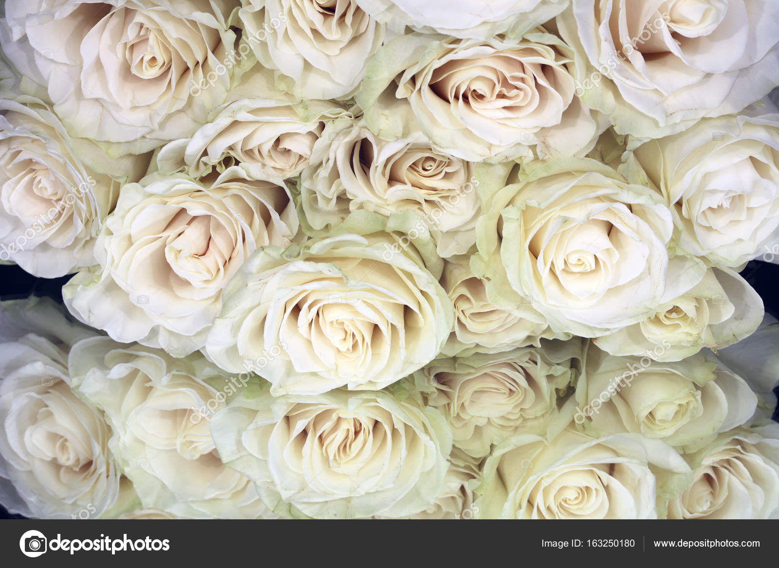 Bunch Of White Roses Stock Photo Benri185 163250180