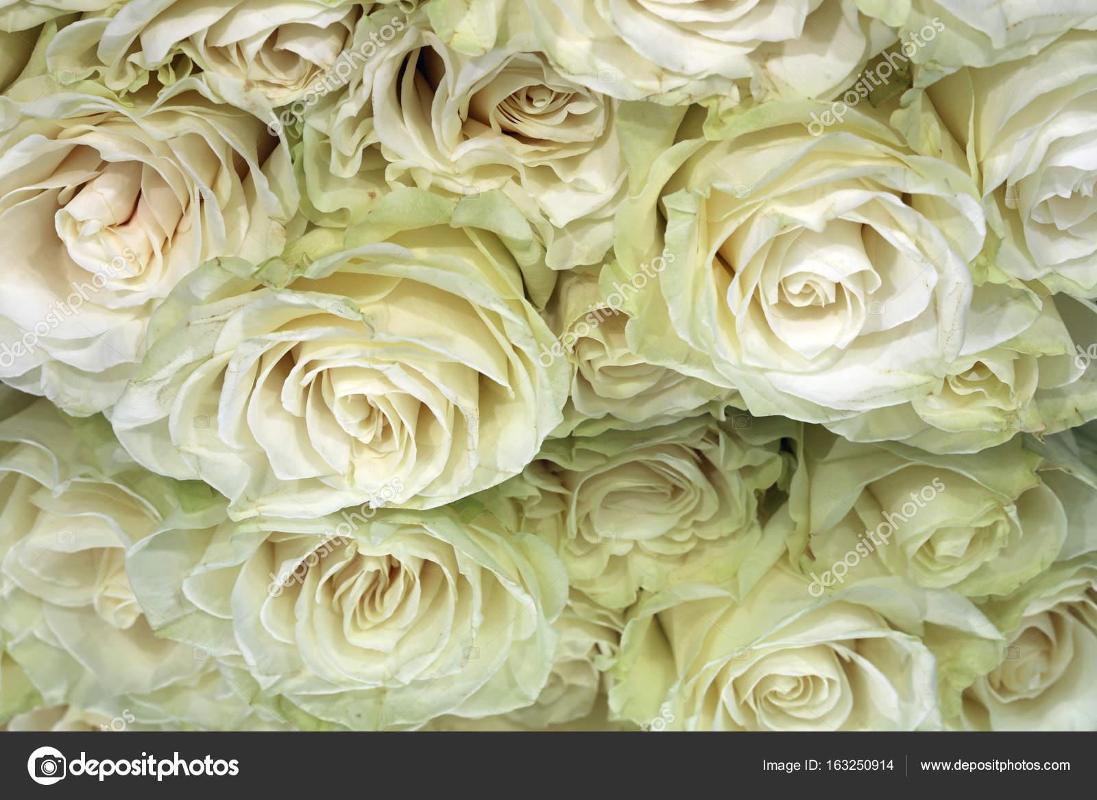 Bunch Of White Roses Stock Photo Benri185 163250914