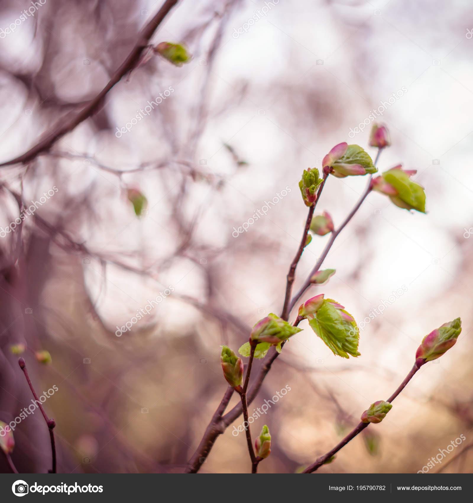 Branch Linden Tree Shallow Depth Field Shot Soviet Lens Helios