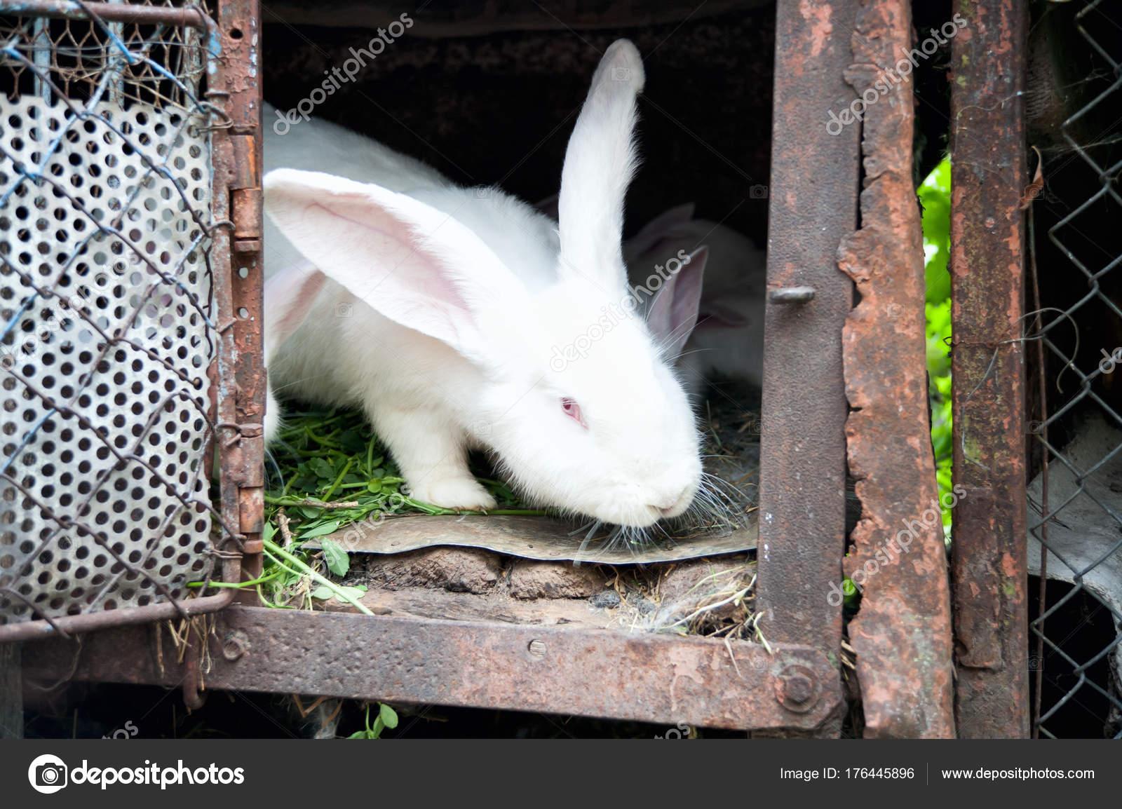 eine weiße flaumige hase kaninchen in einem käfig — Stockfoto ...