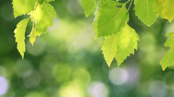 Green tree leaves with natural bokeh background