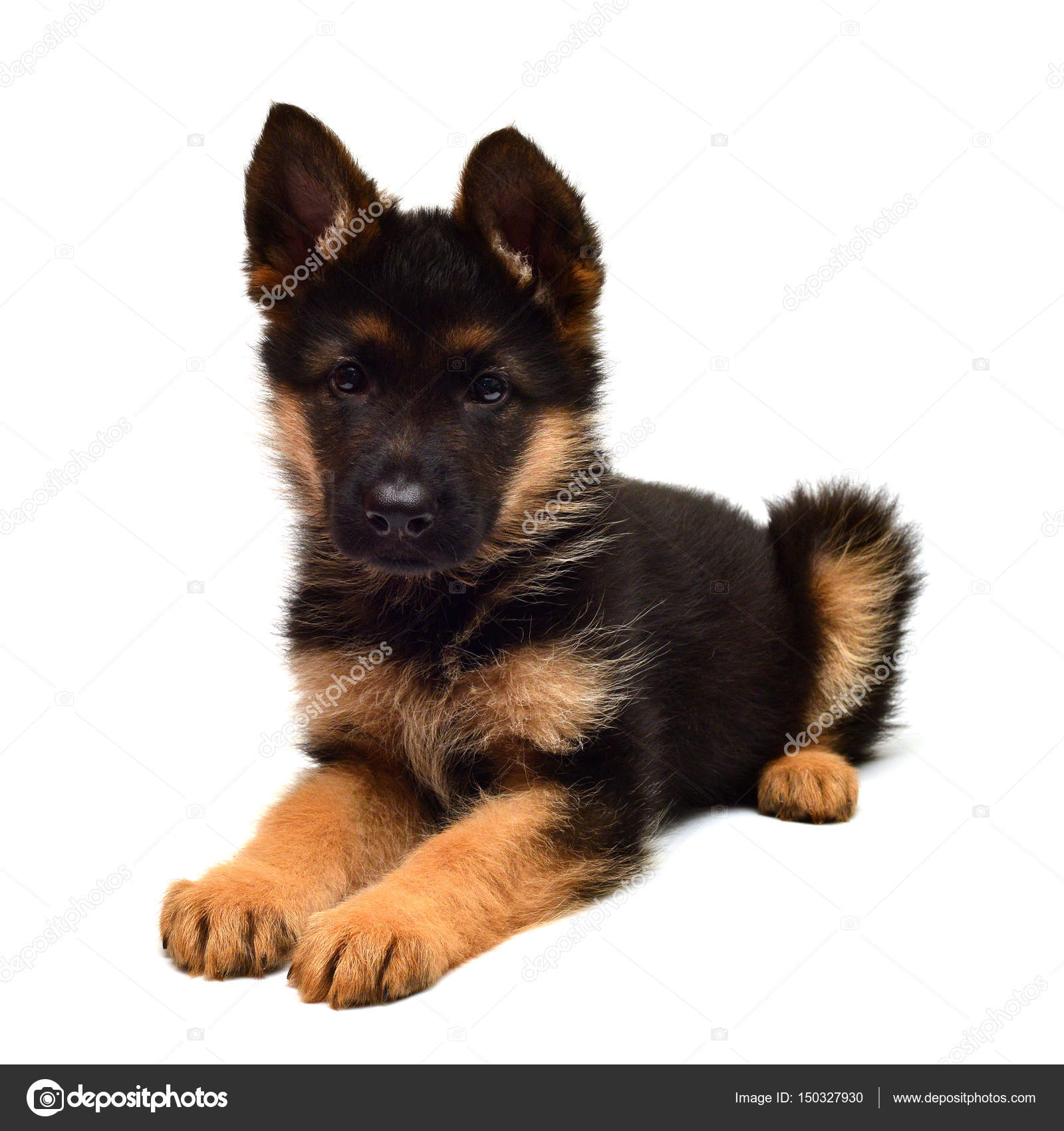 Cute German