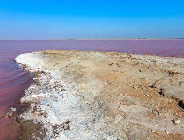 Pink salty Syvash Lake, Ukraine