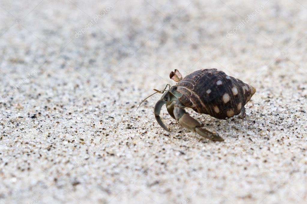 cangrejo ermitaño en la playa — Foto de stock © wollertz #126675688