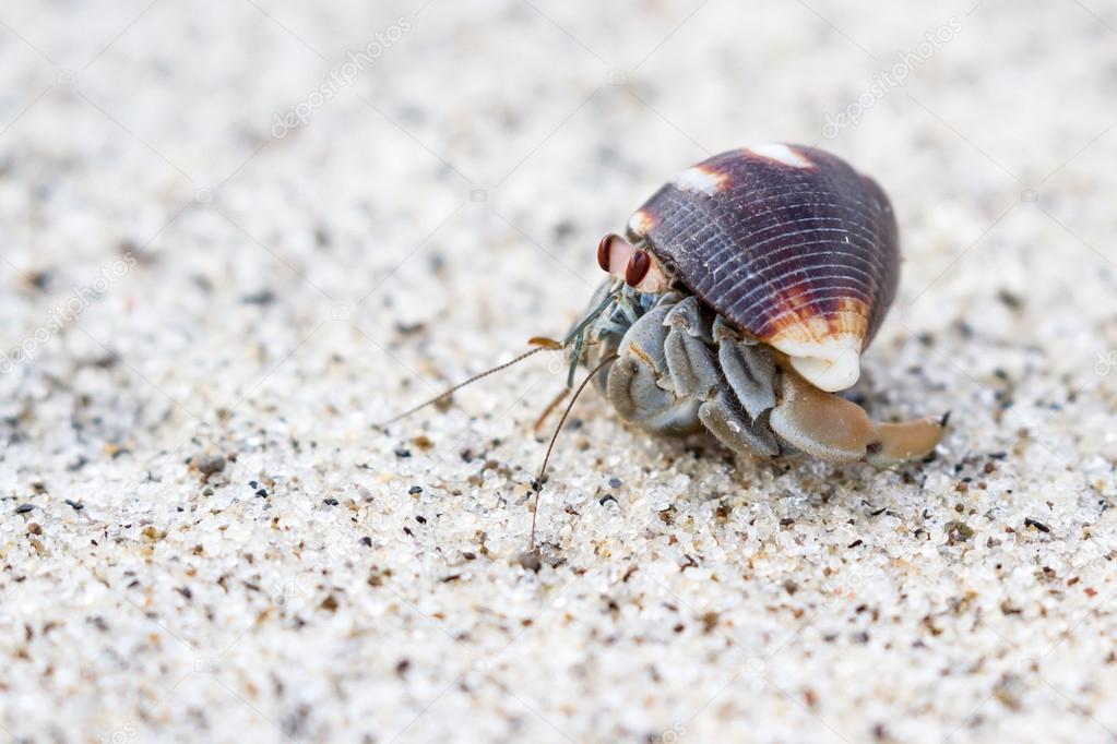 cangrejo ermitaño en la playa — Foto de stock © wollertz #126679308