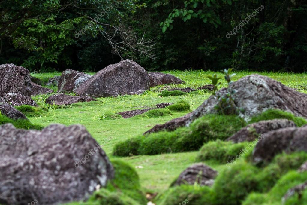green grass and moss