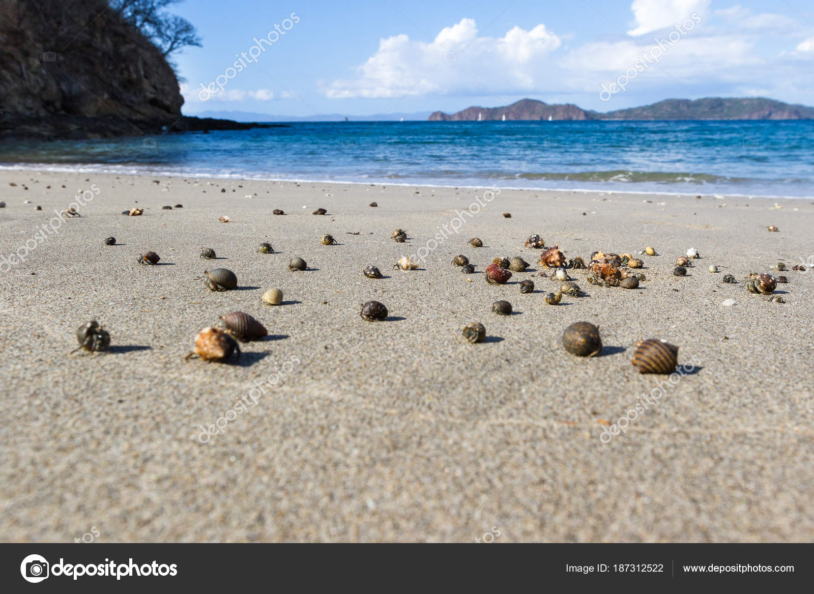 hermit crabs on the beach — Stock Photo © wollertz #187312522