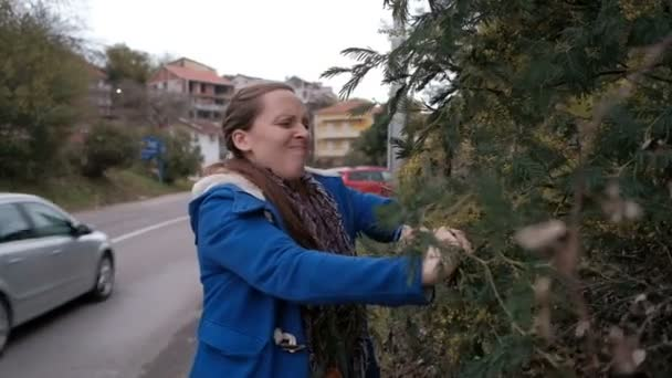 Mladá žena na silnici ulomí mimózy na jaře