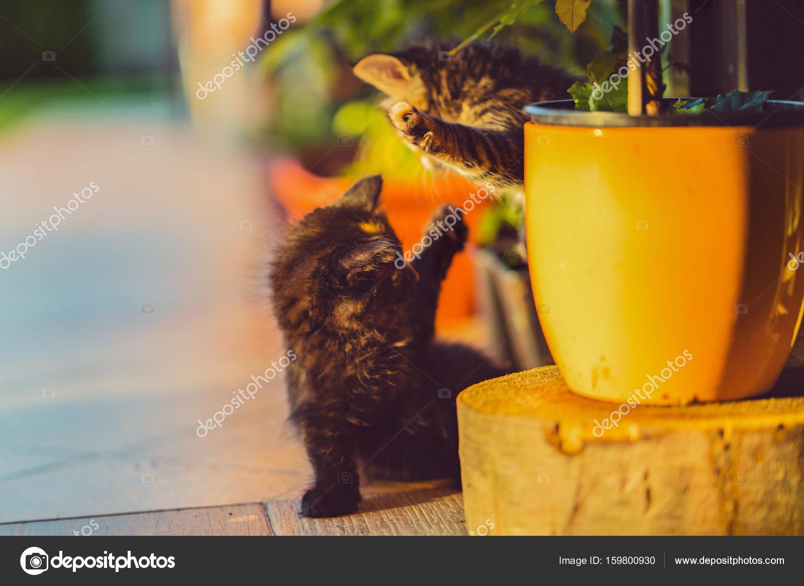 Très très belle et une magnifique chatte.