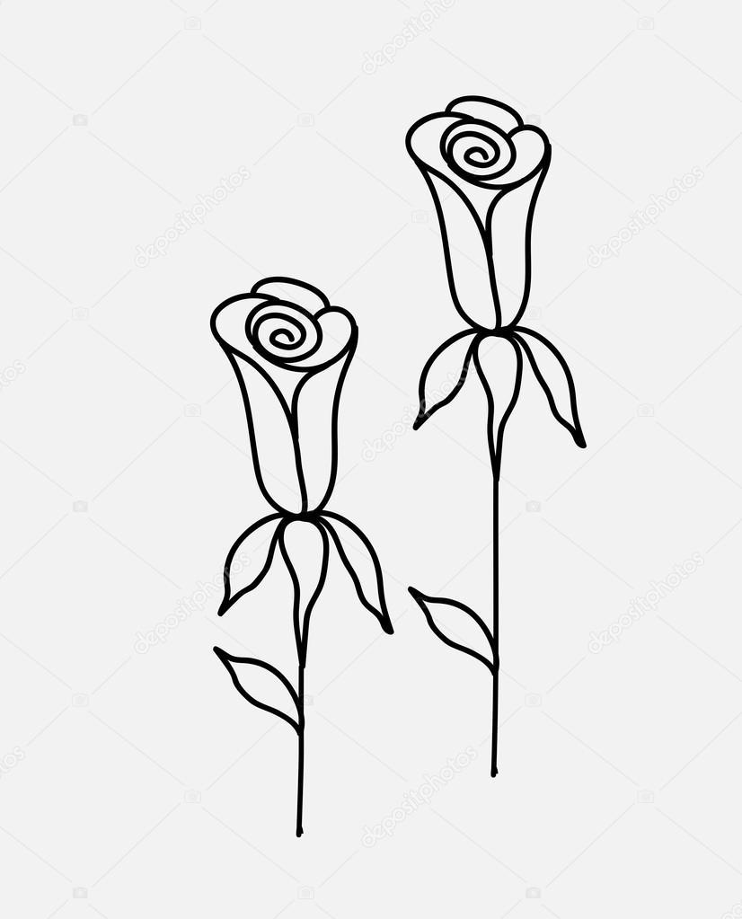 Roses Drawings Vector