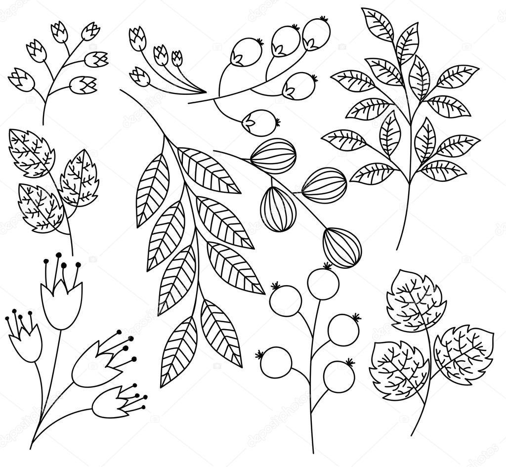 Hand Drawn Leaves Branches and Twigs Vector Set