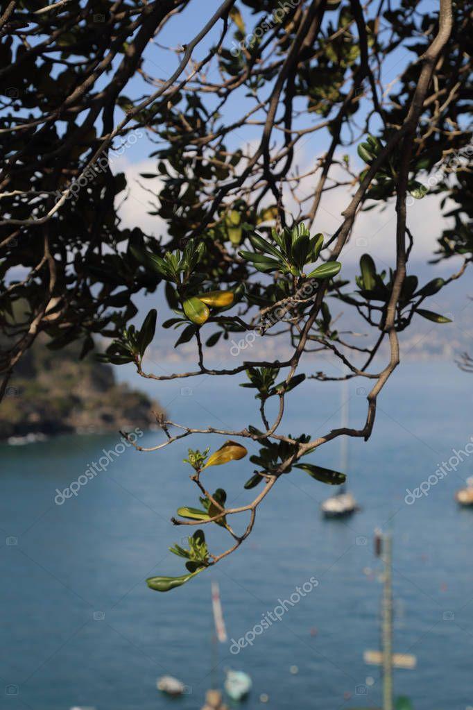PORTOFINO, ITALY - APRIL 5, 2018: Luxury Italian vacations - beautiful Portofino in Ligurian coast. View of the bay with blue water and yachts in Portofino, through the village crown.