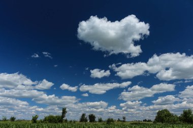 Picturesque sunny cloudy blue sky over corn fields