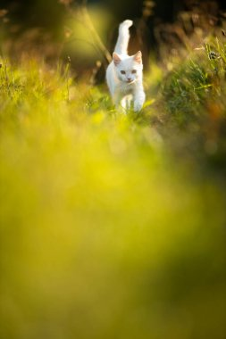 Extremely cute white kitten on a lovely meadow