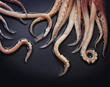 Close up of Squid tentacles