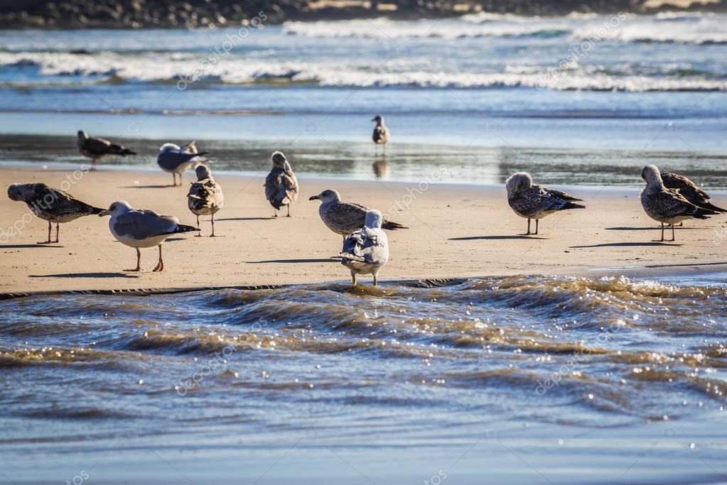 Seagulls in Porto