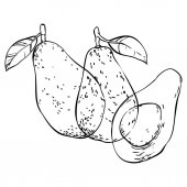 Tři avokádo ručně tažené čmáranice, samostatný