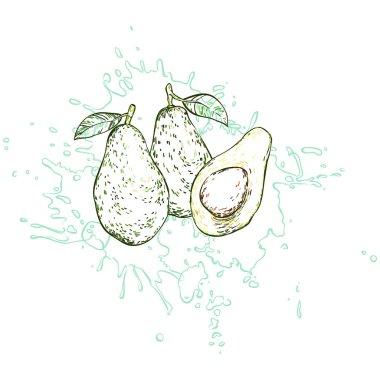 Three avocados drawn by hand