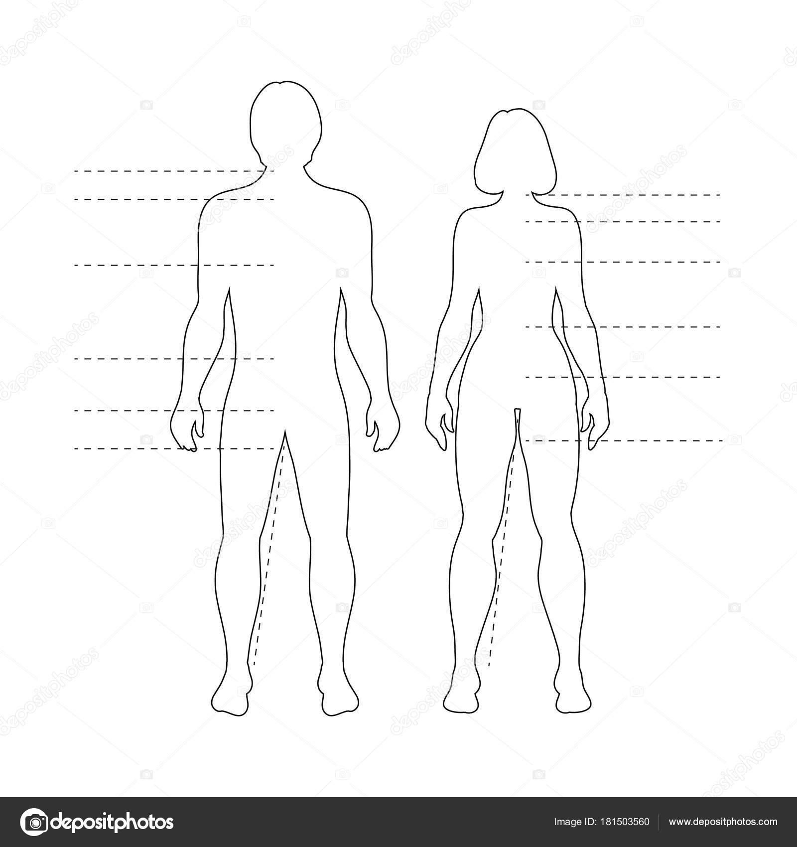 outline human body image