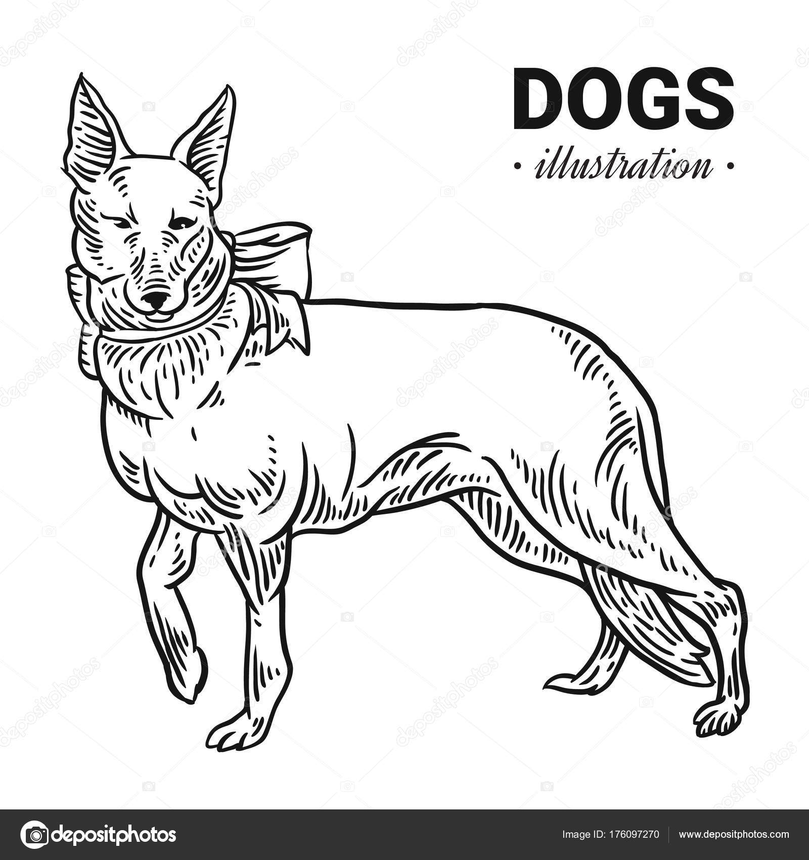 Dog Vector Hand Drawn Illustration Drawing Engraving Ink Lin