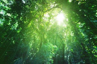 Jungle of La Digue island, Seychelles stock vector