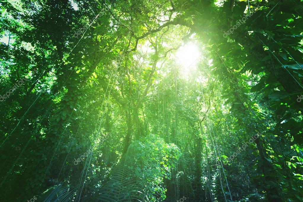 Jungle of La Digue island, Seychelles