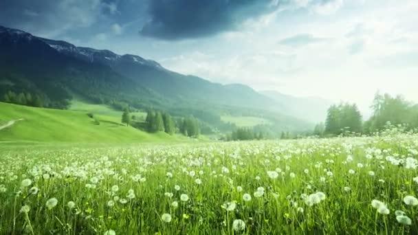 mező tavaszi pitypangok Dolomitok, Dél-Tirol, Olaszország