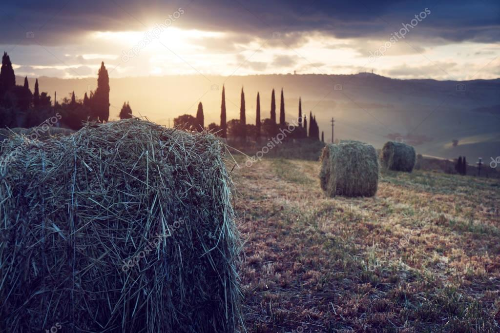 Rural landscape with rolls of hay, Tuscany, Italy