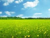 jarní květiny a dokonalé obloha