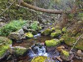 Fiume della montagna di Taiga