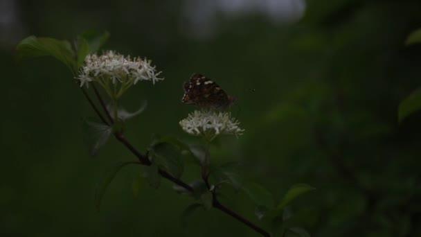 Motýli, motýli, hmyz, květiny