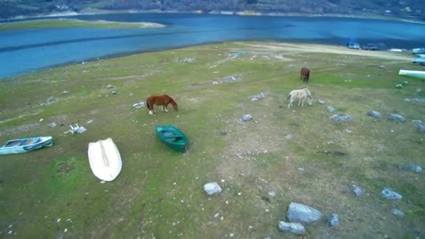 Koně na břehu jezera poblíž čluny
