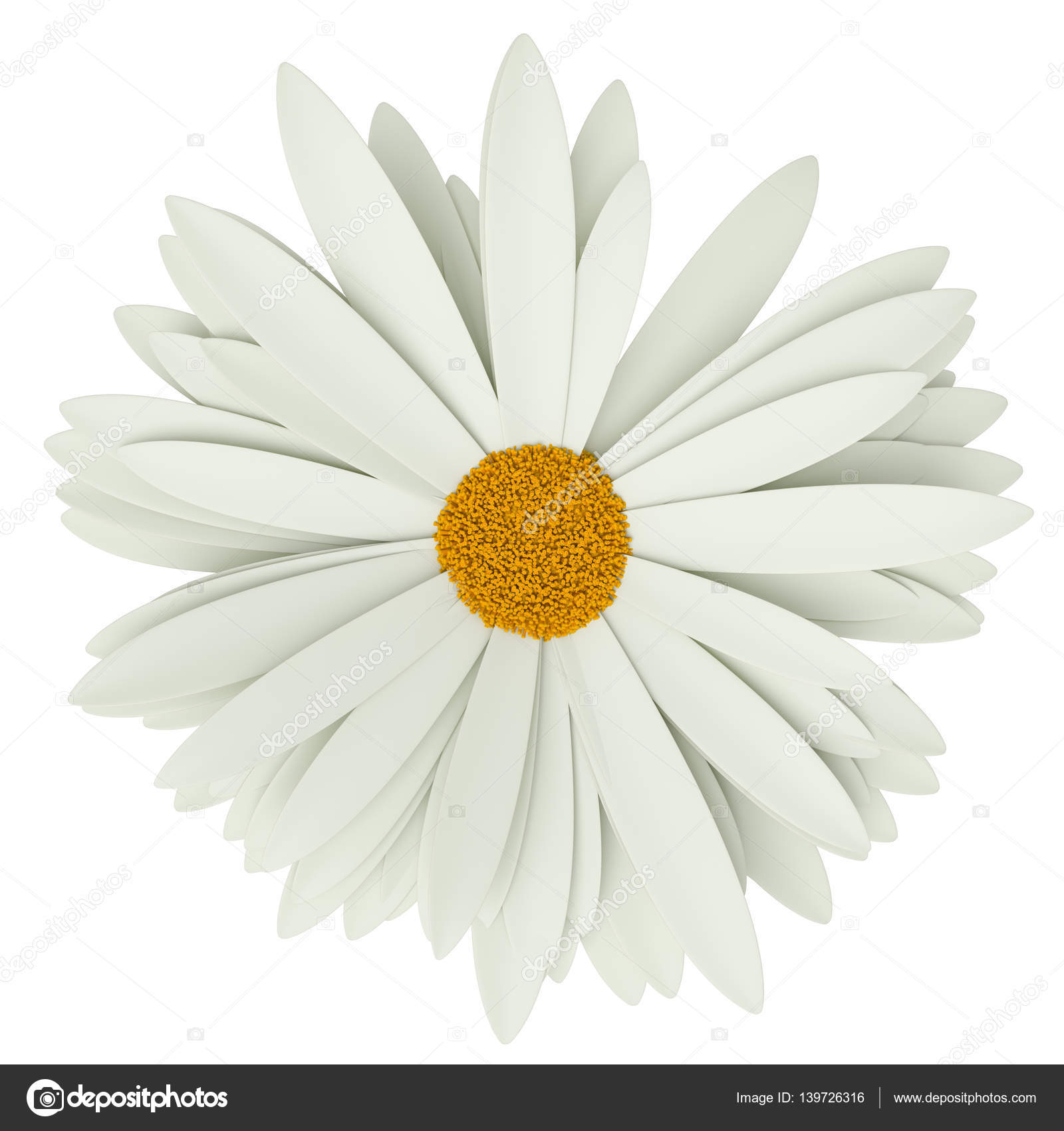 Chamomile flower. Summer symbol for your design — Stock Photo ...