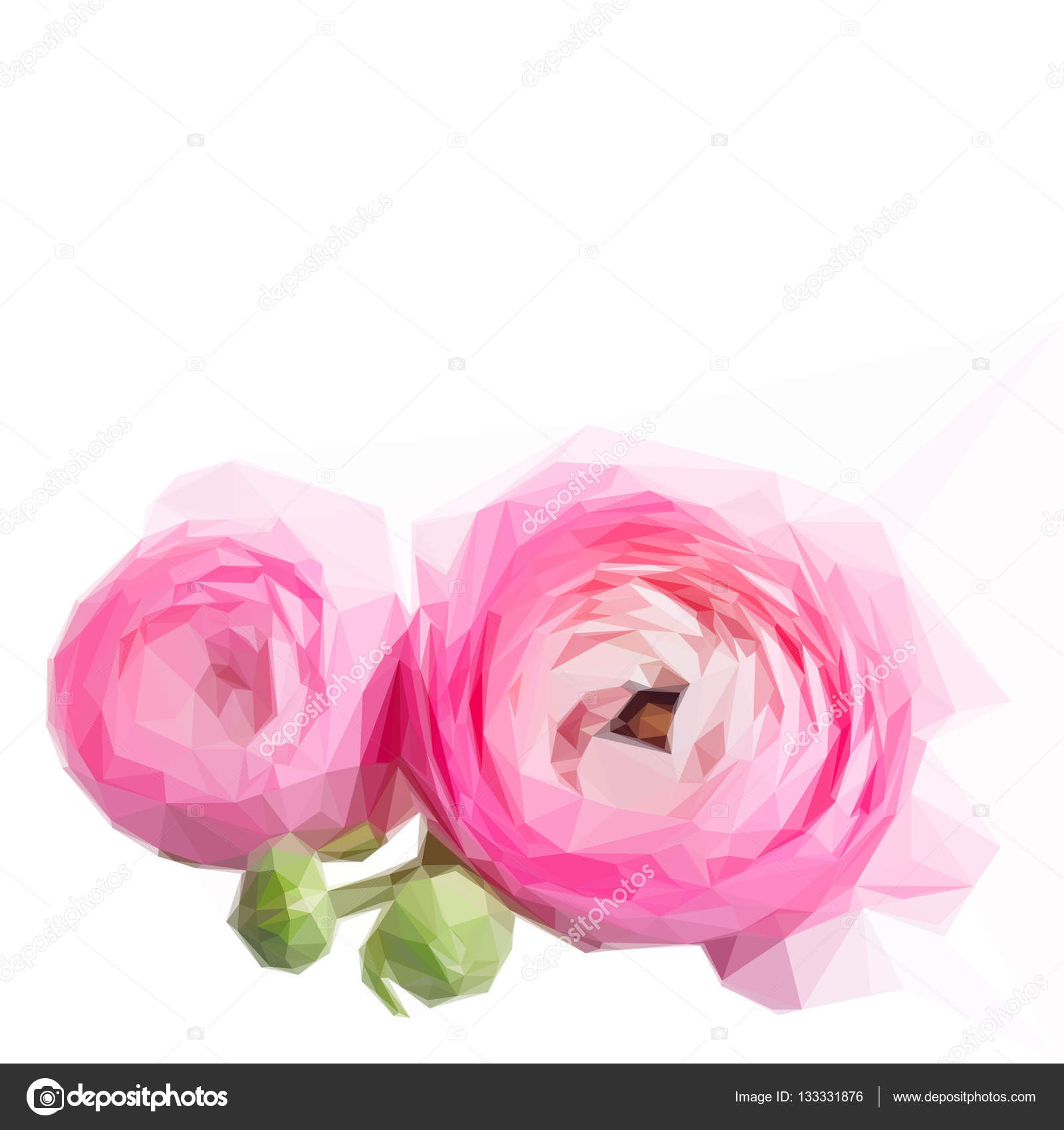 Pink And White Ranunculus Flowers Stock Vector Neirfys 133331876