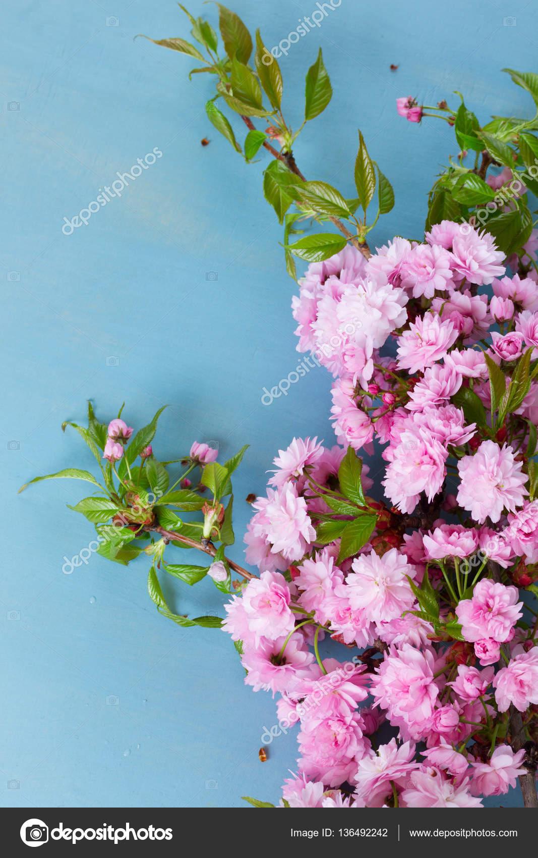 Fresh Spring Flowers On Blue Stock Photo Neirfys 136492242